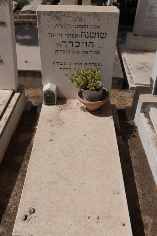 שושנה הוכריך (שורה יז'- 13)