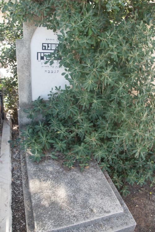 שושנה ליפקין (שורה כה'- 14)